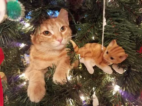 Butterscotch in the Christmas Tree