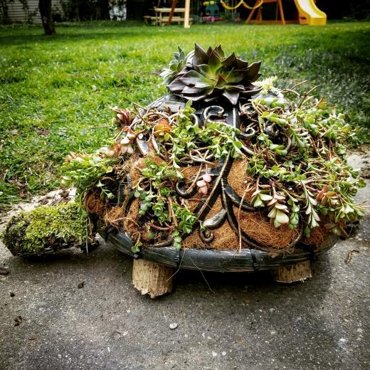 Succulent Turtle 🐢🌱