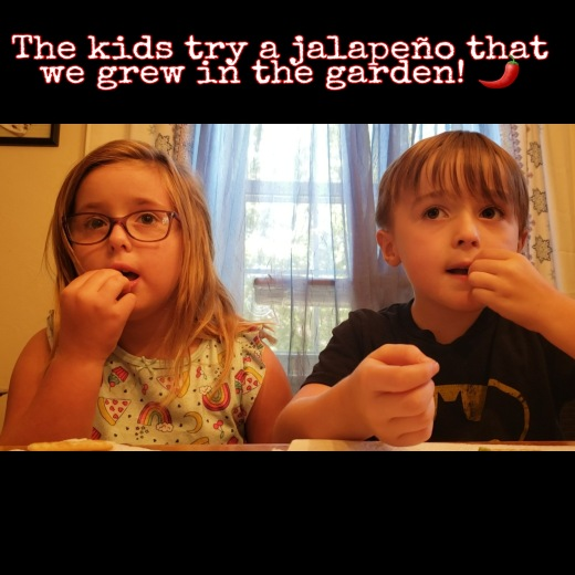 Molly & Ian try a jalapeño from the garden! 🌶️